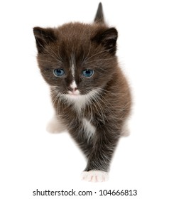 The brown kitten on the white background