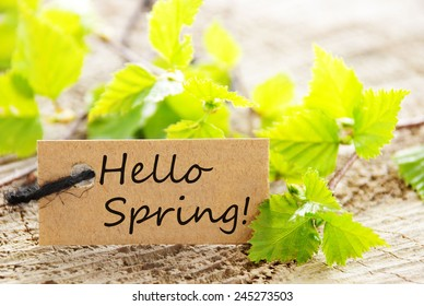 Brown Label With Black Ribbon And English Text Hello Spring With Green Branches On Wooden Background