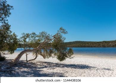Brown Lake, North Stradbroke Island, Queensland, Australia.