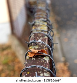 A brown leaf is caught in barbed wire wrapped around an old rusting, with moss growing on it, fence during autumn. The perspective of the fence is vanishing.