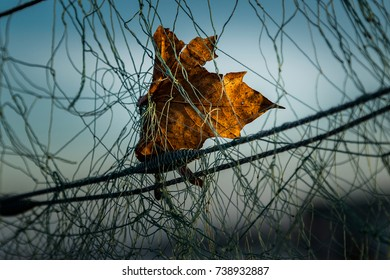 Brown leaf hanging from a fish net