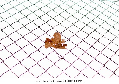 Brown Leaf Stuck in a Fence