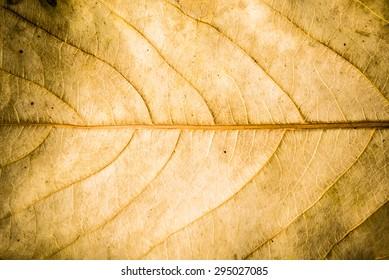 Brown leaf  texture.