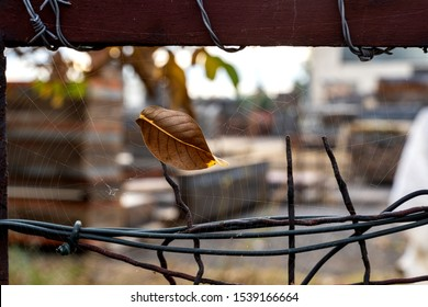 A brown leaf with leaf veins visible is stuck in a spider web on a brown old painted, but rusting, fence with barbed wire during autumn.