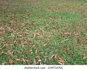 brown leaves on green grass and a floating brown leaf