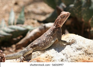 Brown Lizard Warming in the Hot Sun