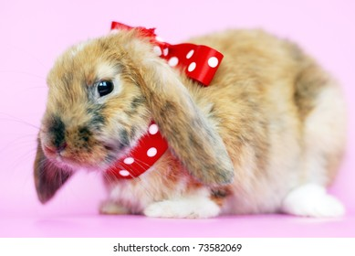 Brown lop-eared rabbit with red bow