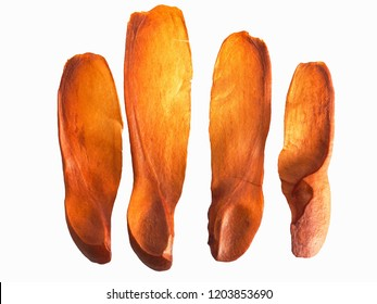 brown mahogany seed on white background . its have wing can fly to be new tree .