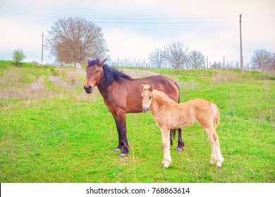 brown mare and foal on green meadow
