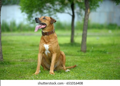 Brown mongrel dog playing in the park