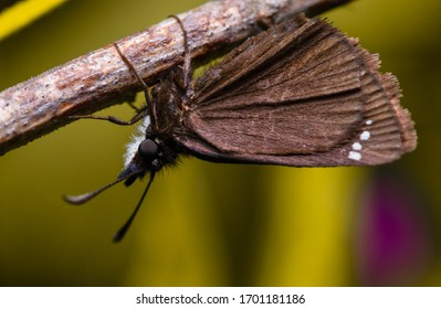 A brown moth hanging on a breach