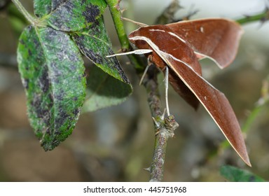 brown moth on nature background