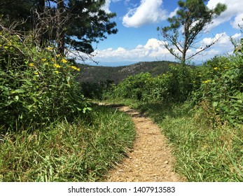 Brown Mountain Trail in the Shenandoah National Park Virginia USA. The Blue Ridge Mountains are in the background which are part of the Appalachian Mountain range.