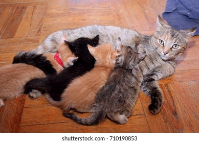 BROWN AND ORANGE TABBY CAT WITH BABIES