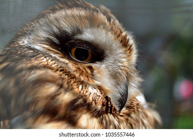 A brown owl (head) in a cage. Close-up.