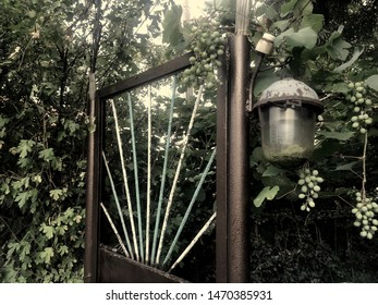 Brown painted metal gate with green and white rods and old dirty flaked glass street lamp in grapevine with grones and trees on the backdrop. Decadence abandoned dark pale sepia entrance background