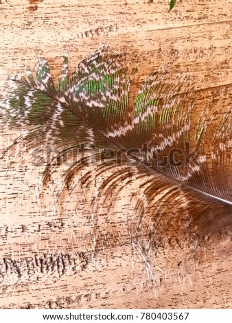 Brown Peacock Feather On Raft Wood Stock Photo (Edit Now) 780403567