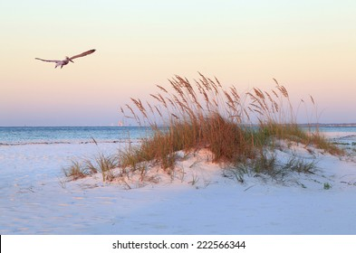 A Brown Pelican Flies Over a White Sand Florida Beach at Sunrise