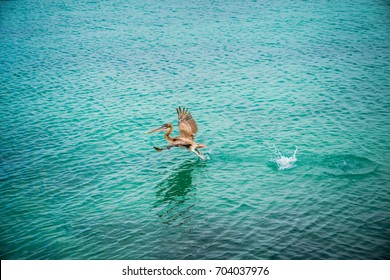 Brown Pelican Flying. Pelican Silhouette Wings Above Blue Ocean. Crossing Blue Sky. Sea Bird. Isolated Wallpaper, Pelican Background. Takes off White Pelican. Blue Tropical Landscape. Seaside