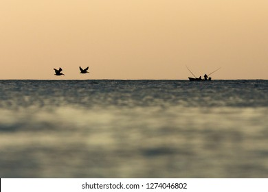 Brown Pelican, Pelecanus occidentalis flying with outstretched wings on horizont towards the boat of fishermen, Tobago island. Caribean nature, exotic adventure, bird silhouette at dusk, ocean, sea