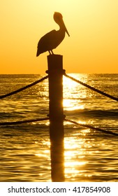 Brown pelican perched on a top of a post at the ocean.