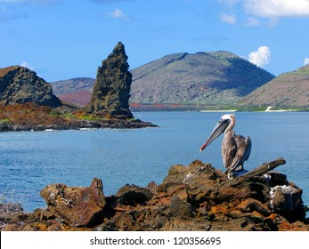 Brown Pelican with the Pinnacle Rock in the back, Island of Bartolome, Galapagos