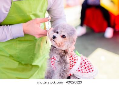 a brown pet dog is having grooming