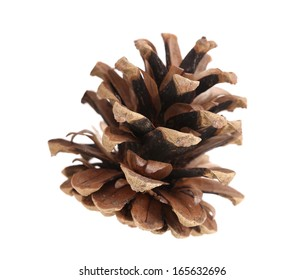 Brown pine cone. Isolated on a white background. Horisontal.