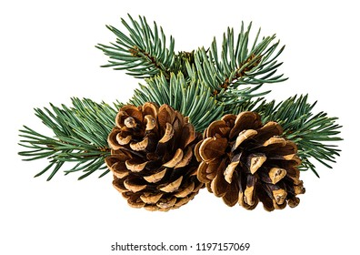 Brown pine cone on white background with clipping pass - Shutterstock ID 1197157069