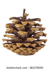 Brown pine cone over on white background