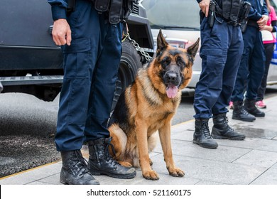 Brown police dog-German shepherd with armed police on duty