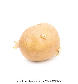 Brown potato with sprouts, isolated over the white background