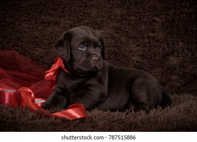 brown puppy with red ribbon