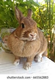Brown rabbit on a white desk in a garden