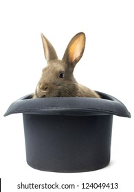 Brown rabbit staring inside the black hat