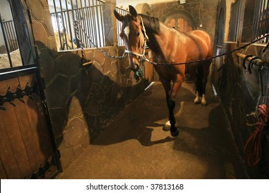 Brown race  horse in stable