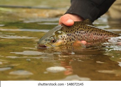 brown release