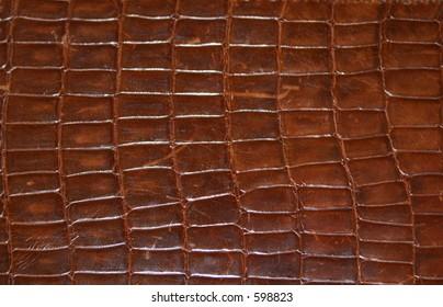 Brown Reptile Print