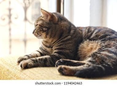 Brown resting cat on a chair on sunny hot summer day, young kitten relaxing, cat looking through the window to the left, space for text