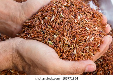 Brown rice in hands holding,Thai Rice,Organic