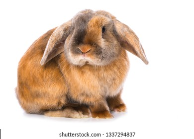 Brown satin rabbit isolated on white background