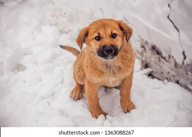 Brown shaggy and fluffy homeless puppy is frozen and looks unhappy and scared, concept photo, dedicated to volunteers, for the International Day for the Protection of Animals