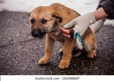 Brown shaggy and fluffy homeless puppy is frozen and looks unhappy and scared, and near human hands, concept photo, dedicated to volunteers, for the International Day for the Protection of Animals