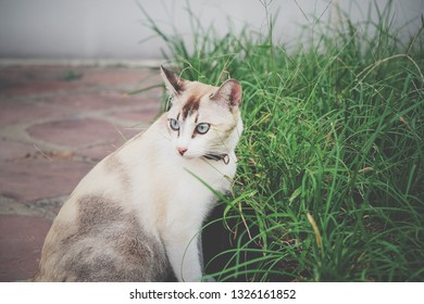 The brown shot hair cat sitting beside the green field in vintage color