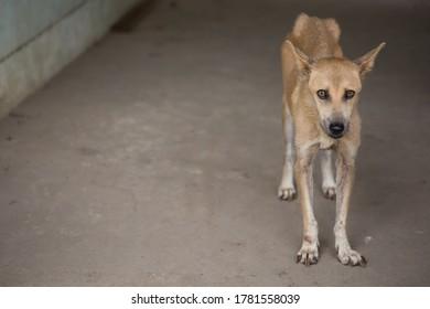 brown skinny stray dog, alone abondon pet