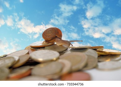 Brown snail climb up to the top of the pile of coins with blue sky and white cloud in background, Travel up the mountain of money , Victory and success from patience , Slow economic growth