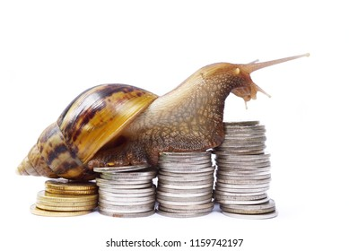 Brown snail climbing  the pile of coins on white background , Business and finance , Victory and success from patience , Slow economic growth