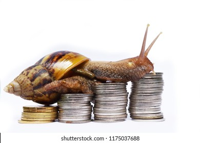 Brown snail climbing  the pile of coins on white background , Financial with development and commit business concept , Victory and success from patience , Slow economic growth