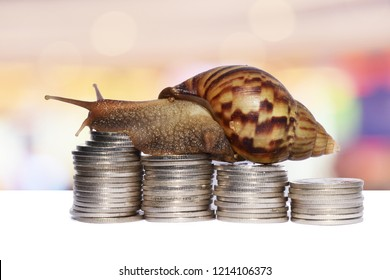 Brown snail climbing  the pile of coins with bright colorful  background  , Victory and success from patience  , Slow economic growth , Development financial and commit business concept