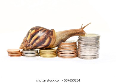 Brown snail climbing  the pile of coins on white background  , Financial and commit business concept , Victory and success from patience , Slow economic growth